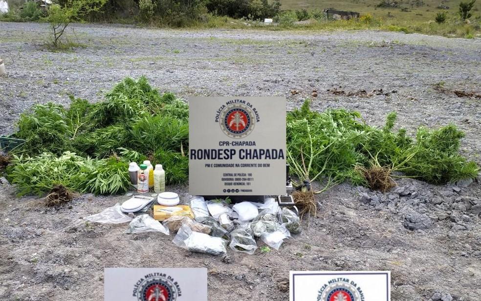 Mucugê (BA): Roça de maconha é encontrada pela polícia no município