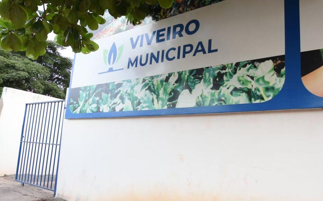 LEM: Viveiro Municipal abriga 4 mil mudas de espécies do Cerrado
